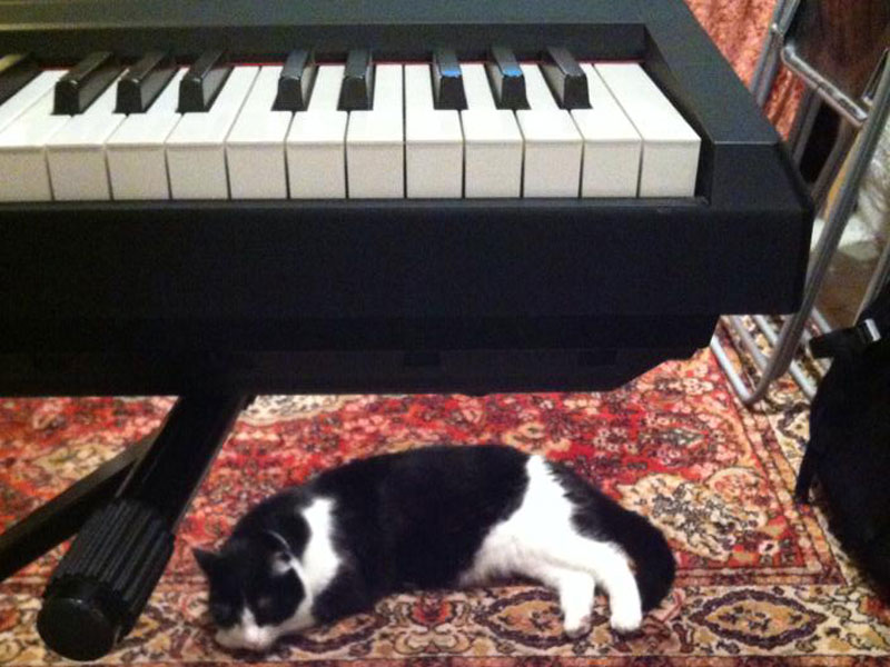 However Salma, the studio cat, is the one really in charge